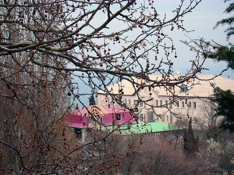 птицы фото гаспра стройгородок русской бани это